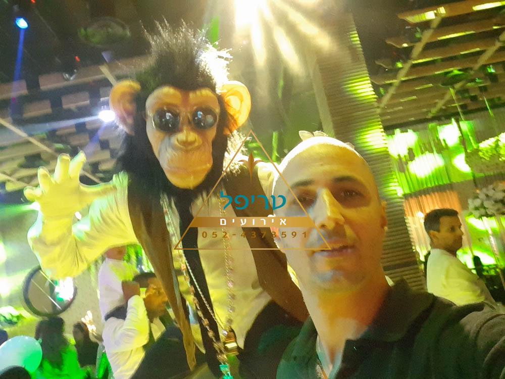 קופים לאירועים , קופים שלומי טריפל אירועים , מסיבת קופים לבת מצווה , מסיבת קופים לאירועים