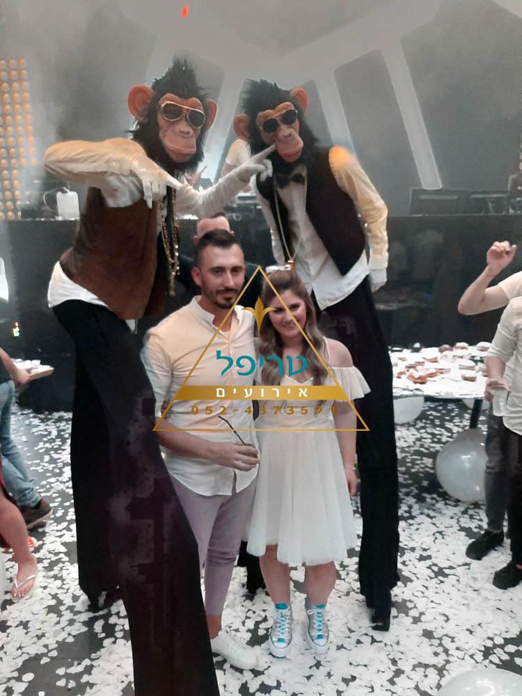 קוף לחתונה , קופים לחתונה , מסיבת קופים לחתונה , קופיי המסיבות , טריפל אטרקציות , מסיבת קופים לבת מצווה